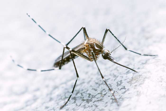 mosquito sitting on the sheet